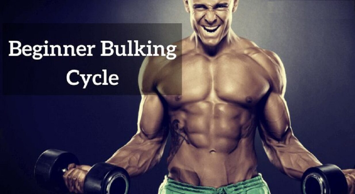 Best Bulking Cycle