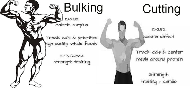 bulking-cutting