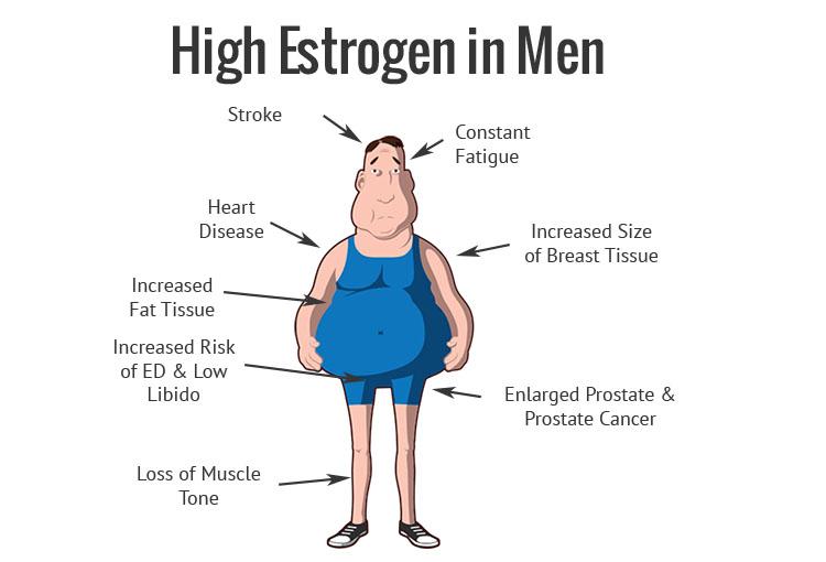 High-Estrogen-In-Men
