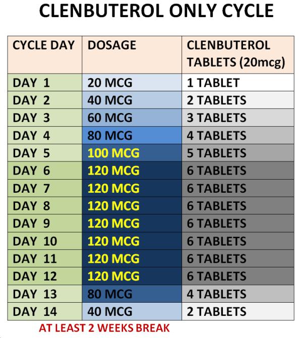 Clenbuterol Cycle Chart